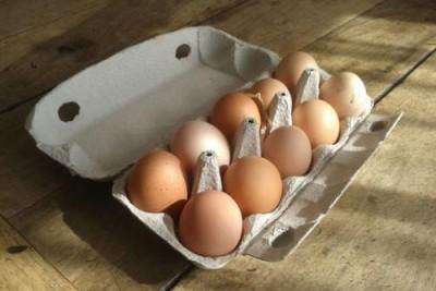 En İyi ve Çok Kazandıran Perakendecilik Konseptleri : Tavuk Evlat Edinme İle Yumurta Tavukçuluğu